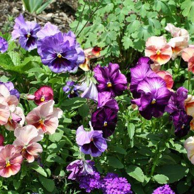 造園業のカラフルな花